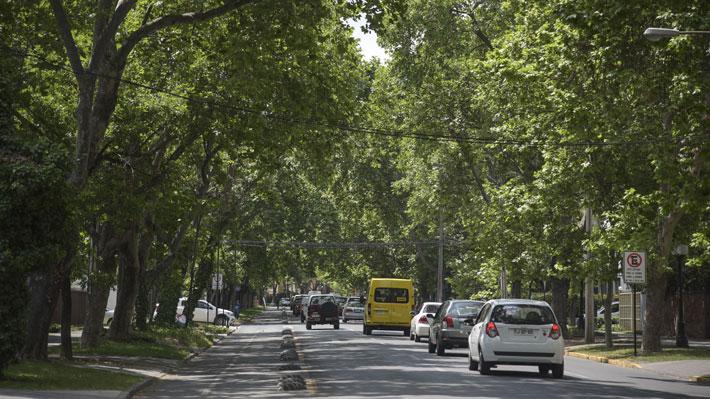 Providencia endurecerá sanciones a constructoras que dañen los árboles de la comuna